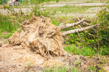 displace: Fallen tree after heavy storm in thailand Stock Photo