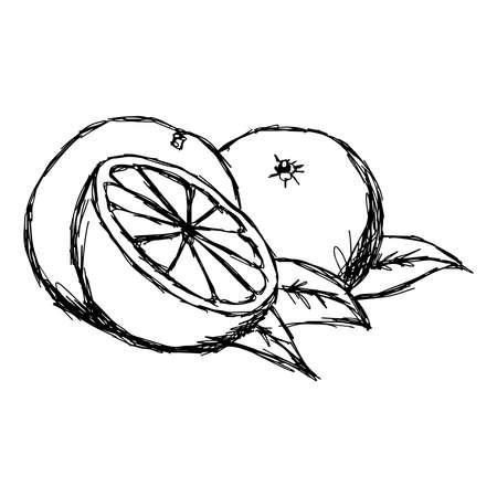 illustration doodle of sketch orange isolated Illustration