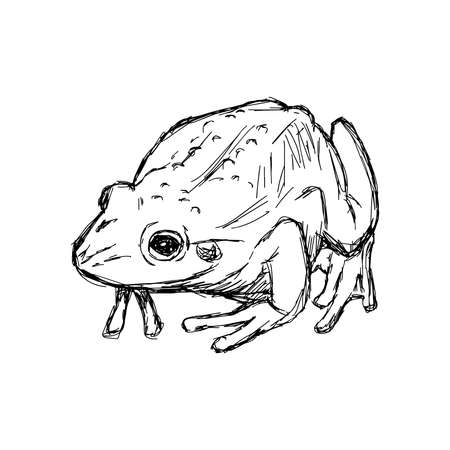 rana: illustration vector hand drawn doodle toad isolated on white