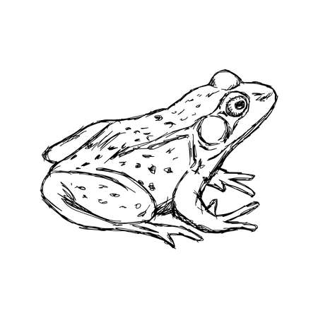 rana: illustration vector hand drawn doodle frog isolated on white
