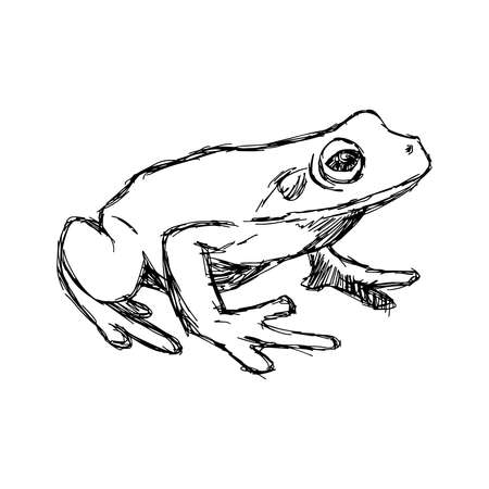 rana: illustration vector hand drawn doodle frog isolated on white.