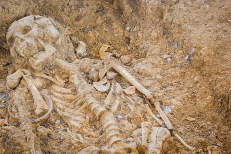 archaeologically: grave burial skeleton human bones, Archaeologically Sites, Photography, thailand, copyspace.
