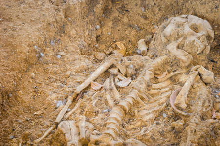 archaeologically: grave burial skeleton human bones, Archaeologically Sites, Photography, thailand, copyspace on the left.