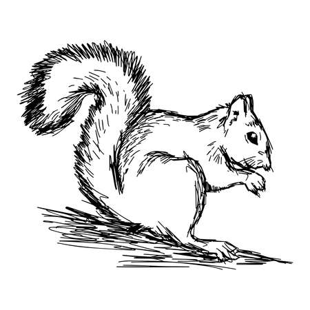 artful: illustration vector hand draw doodles of squirrel isolated on white background