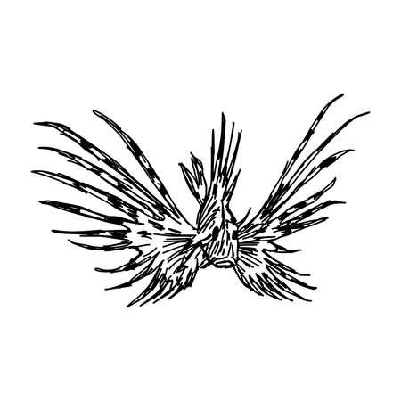 lionfish: illustration doodles of marine aquarium fish Zebra Lionfish isolated on white background