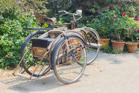 wheeler: CHIANG RAI, THAILAND - APRIL 25 : classic wheeler Tricycle bicycle in the fresh garden on April 25, 2016 in Chiang rai, Thailand