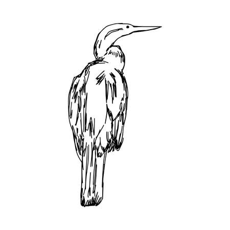 perching: illustration vector hand drawn sketch of African Darter isolated on white background