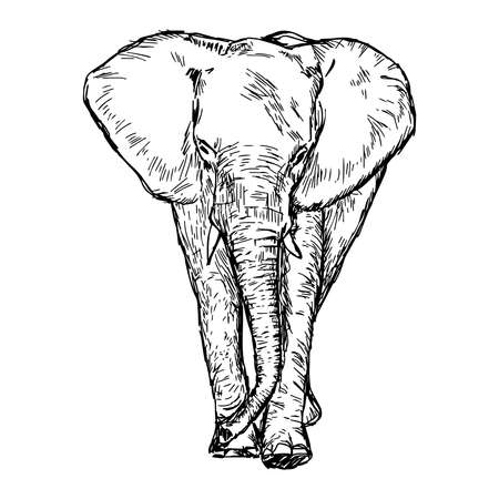 massive: illustration vector hand drawn doodle african elephant isolated on white Stock Photo