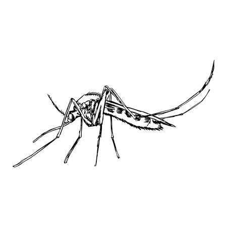 plague: illustration vector doodle hand drawn of  sketch mosquito isolated on white background