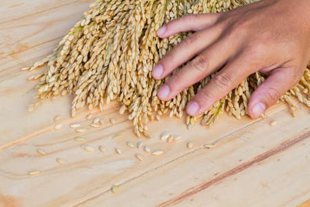 closeup hand touching ear of rice on wooden background Stock Photo