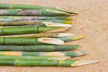 stabbing: sharpened bamboo sticks on the ground used for stabbing dracular, copyspace