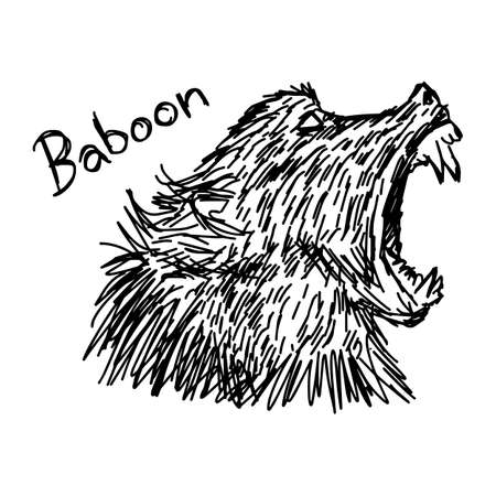 vector illustration sketch hand drawn with black lines of baboon isolated on white background
