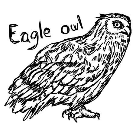 vector illustration sketch hand drawn with black lines of eagle owl isolated on white background