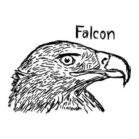 vector illustration sketch hand drawn with black lines of falcons head isolated on white background Illustration