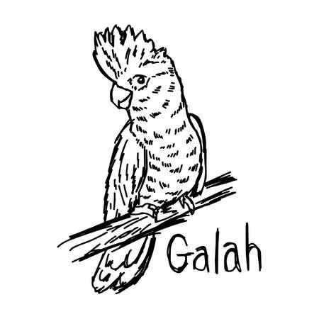 vector illustratie schets hand getekend met zwarte lijnen van galah geïsoleerd op een witte achtergrond