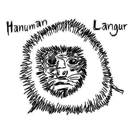 vector illustration sketch hand drawn with black lines of hanuman langurs head isolated on white background