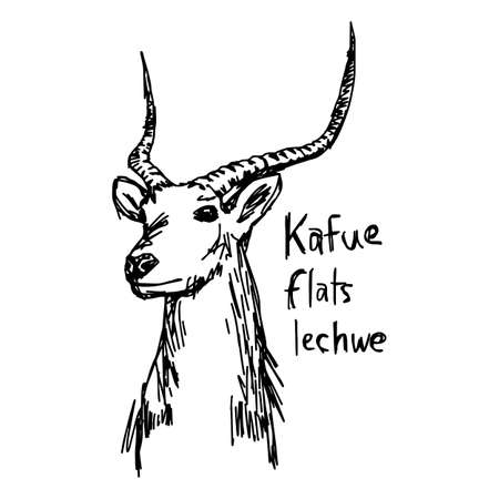Kafue flats lechwe - vector illustration sketch hand drawn with black lines, isolated on white background