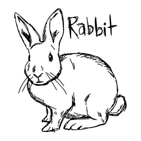 rabbit - vector illustration sketch hand drawn with black lines, isolated on white background Illustration