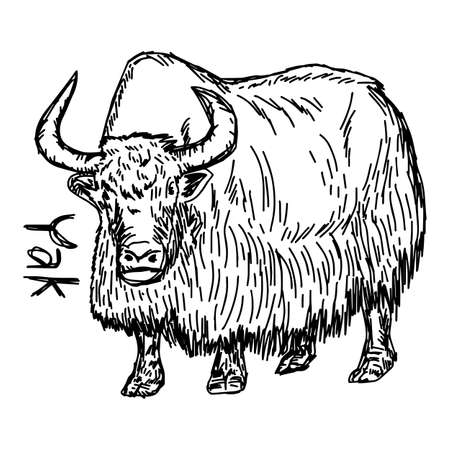 ox eye: Yak - vector illustration sketch hand drawn with black lines, isolated on white background