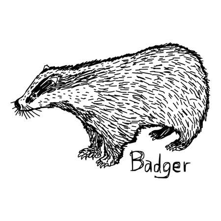 badger - vector illustration sketch hand drawn with black lines, isolated on white background