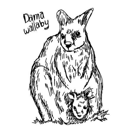 dama wallaby - vector illustration sketch hand drawn with black lines, isolated on white background