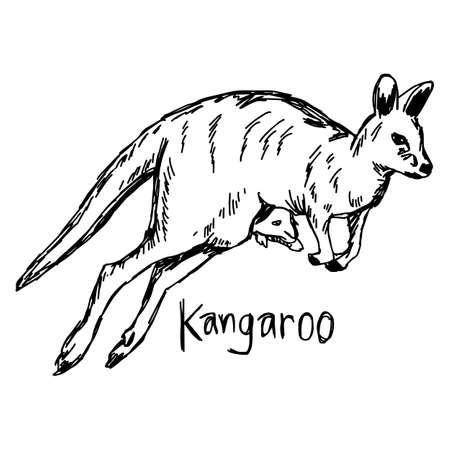 505 Kangaroo Head Cliparts Stock Vector And Royalty Free Kangaroo