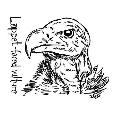 lappet-faced vultures head - vector illustration sketch hand drawn with black lines, isolated on white background