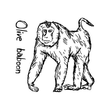 122 Savanna Baboon Stock Illustrations Cliparts And Royalty Free