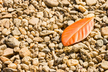 Pebbles and dry leaf in sunlight on the ground or footpath. Stock Photo
