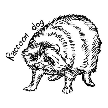 Raccoon dog - vector illustration sketch hand drawn with black lines, isolated on white background Illustration
