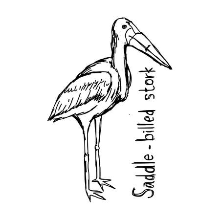 Cute saddle-billed stork - vector illustration sketch hand drawn with black lines, isolated on white background.