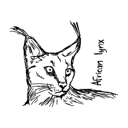 african lynx - vector illustration sketch hand drawn with black lines, isolated on white background