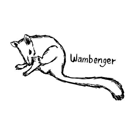 Wambenger - vector illustration sketch hand drawn with black lines, isolated on white background