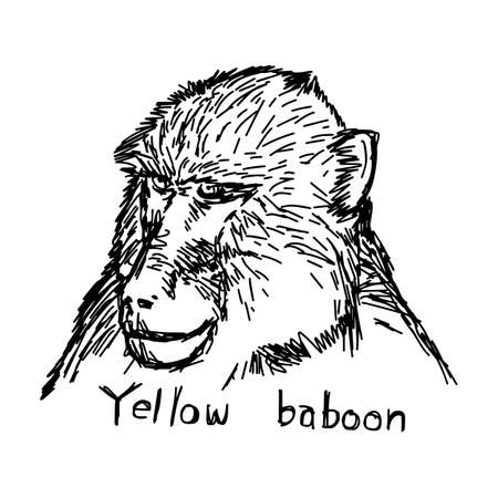 tanzania: yellow baboon head - vector illustration sketch hand drawn with black lines, isolated on white background