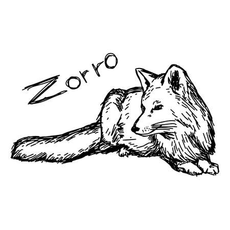 Zorro lying - vector illustration sketch hand drawn with black lines, isolated on white background