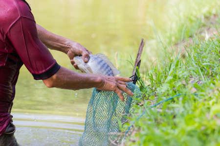 close-up Thai fisherman holding Tilapia fish into the green net Stock Photo
