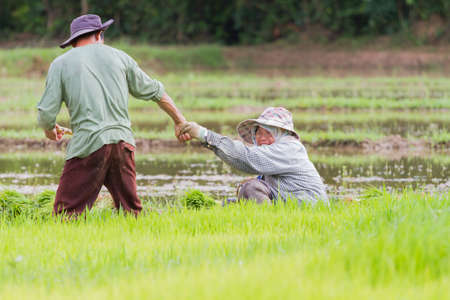 illustrative: CHIANG RAI, THAILAND - JUNE 16 : Unidentified male farmer holding hand of a woman in the field on June 16, 2017 in Chiang rai, Thailand.