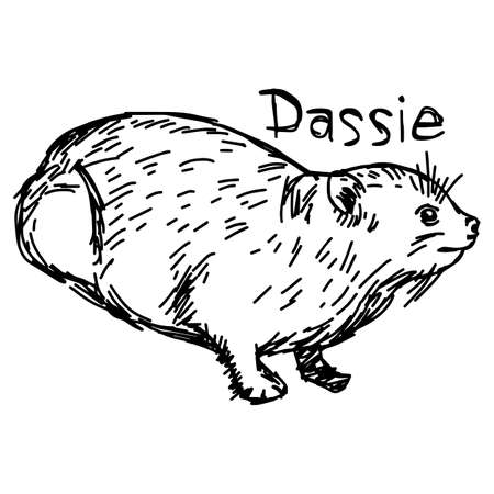 Dassie or Rock Hyrax - vector illustration sketch hand drawn with black lines, isolated on white background