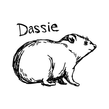 Dassie - vector illustration sketch hand drawn with black lines, isolated on white background Illustration
