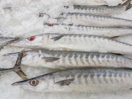 Obtuse barracuda fish fresh in ice sell on supermarket in Thailand Stock Photo