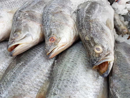 lates: close-up barramundi in ice sold in supermarket in Thailand