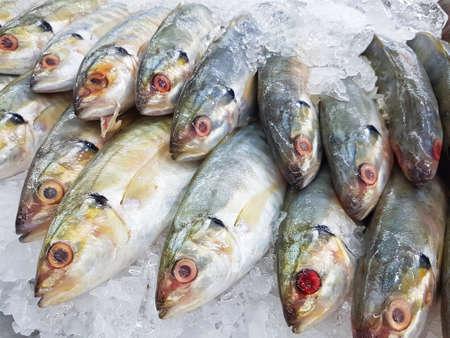 supermarket: close-up fresh mackerel fish on ice in supermarket Stock Photo