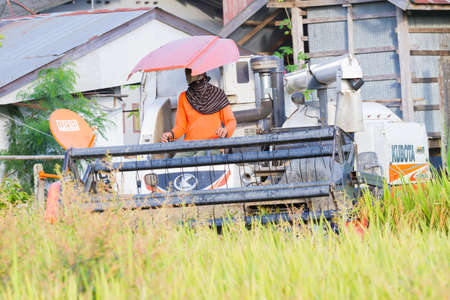 CHIANGRAI, THAILAND - OCTOBER 12: unidentified asian man driving combine harvester on the rice field with the background of the house on October 12, 2017 in Chiangrai, Thailand. Editorial