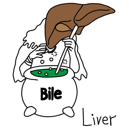 metaphor function of a liver to produce bile vector illustration sketch hand drawn with black lines, isolated on white background. Education Medical concept.