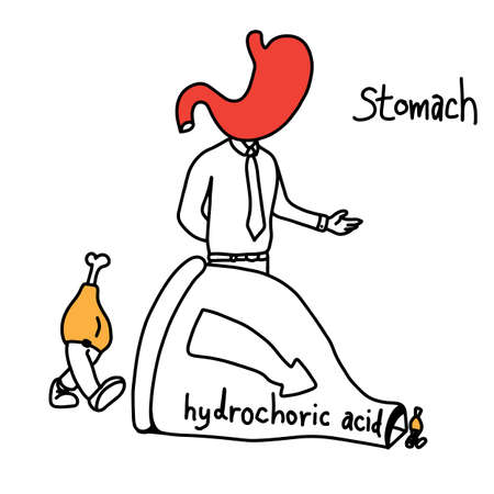 metaphor function of stomach to use hydrochloric acid to make food smaller vector illustration sketch hand drawn with black lines, isolated on white background. Education Medical concept. Çizim