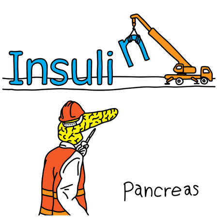 Metaphor function of human pancreas is to produce insulin hormone vector illustration sketch hand drawn with black lines, isolated on white background. Education Medical concept.