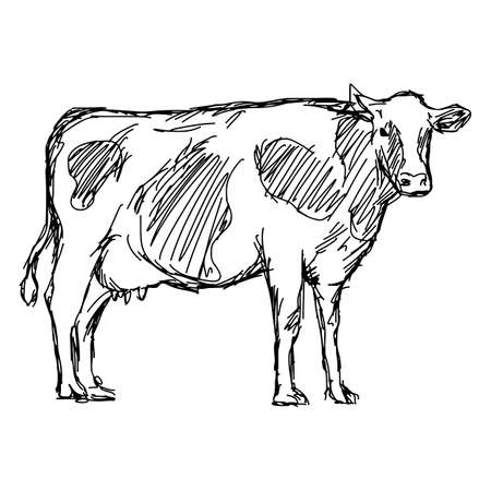 cow vector illustration sketch doodle hand drawn with black lines isolated on white background Illustration