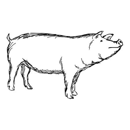pig vector illustration sketch doodle hand drawn with black lines isolated on white background Illustration