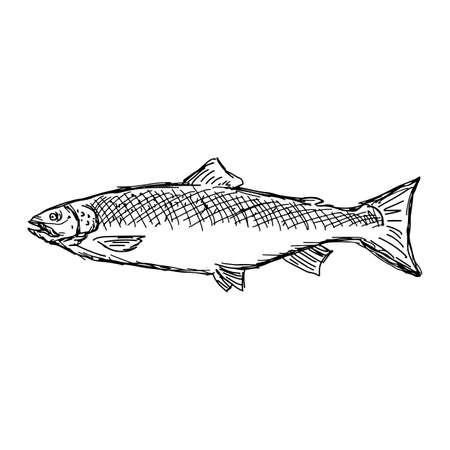 salmon fish vector illustration sketch doodle hand drawn with black lines isolated on white background