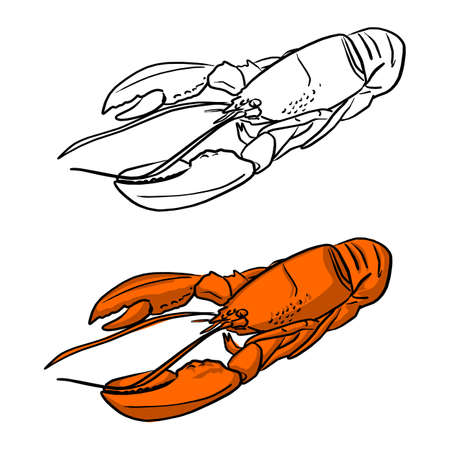 orange sea lobster vector illustration sketch doodle hand drawn with black lines isolated on white background